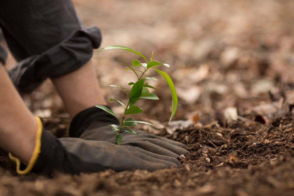person planting a sapling